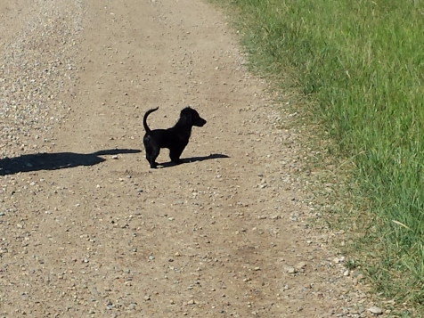 Our newest member of the family...a little dog in a big land!