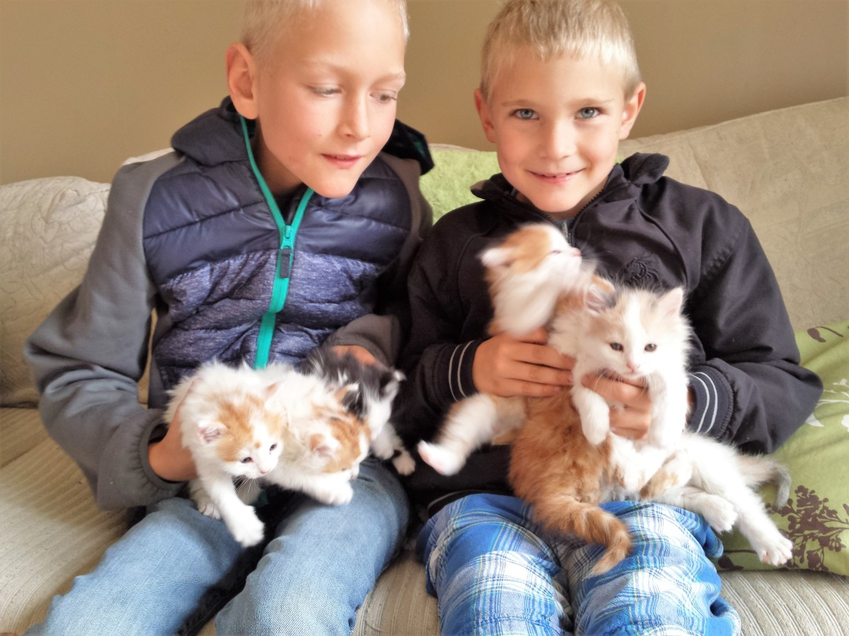 Boyd and Reyd sitting with 6 kittens