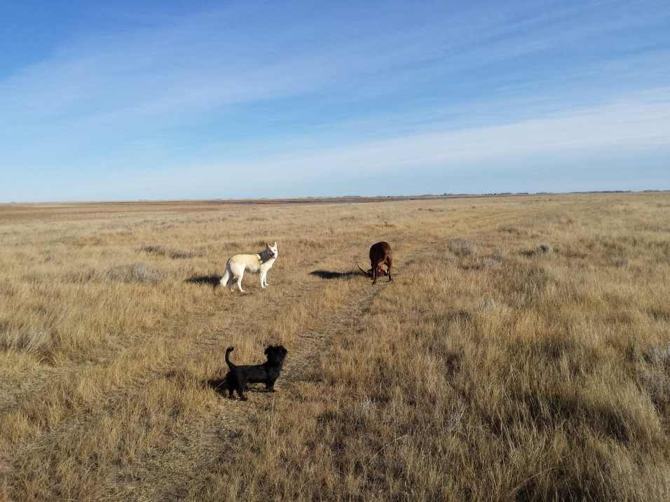 The dogs enjoying a sunny afternoon run