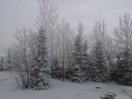 Our frost covered forest!
