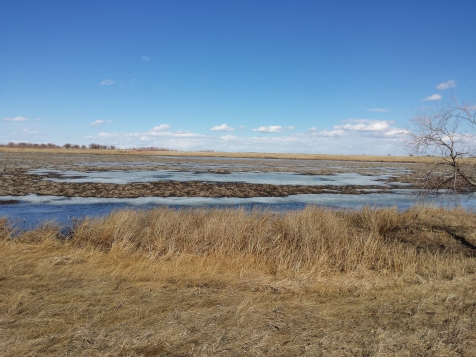 The wetland looks a bit rough with all the vegetation pulled up and waiting for the big melt to be complete
