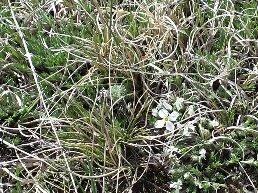 flox moss