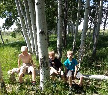 a few little boys checking out the damage the beavers did