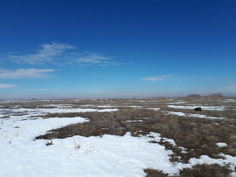In early March there were only snow drifts left on the prairie by early April it was all snow covered again