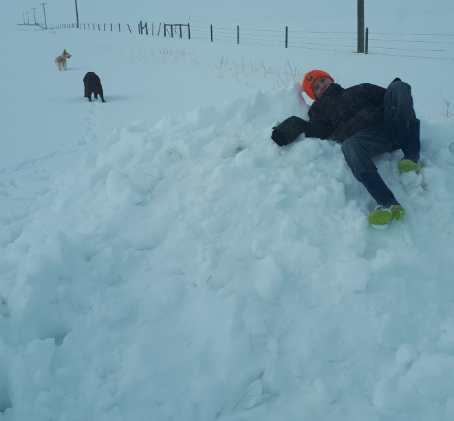 Lots of snow for boys and dogs to play on