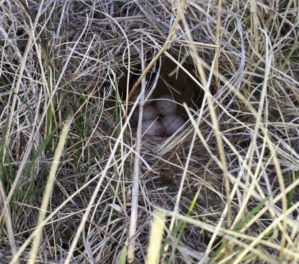 A very well hidden nest!