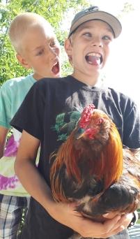 Poor rooster!