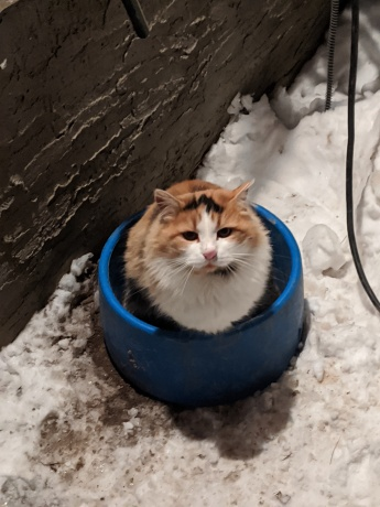 When the water is gone but the bowl is still warm!