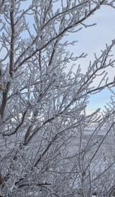 Hoar frost looking spectacular
