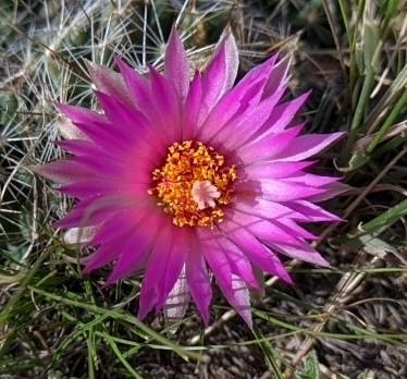 perfect cactus bloom
