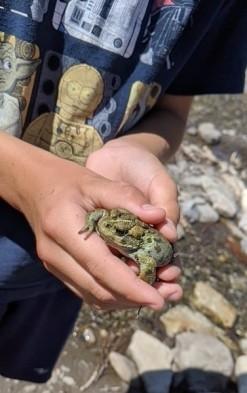 found a big frog